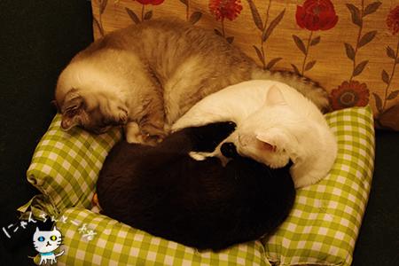 猫ベッドに替えても_e0031853_21444447.jpg