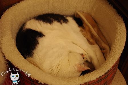 猫ベッドに替えても_e0031853_2145911.jpg