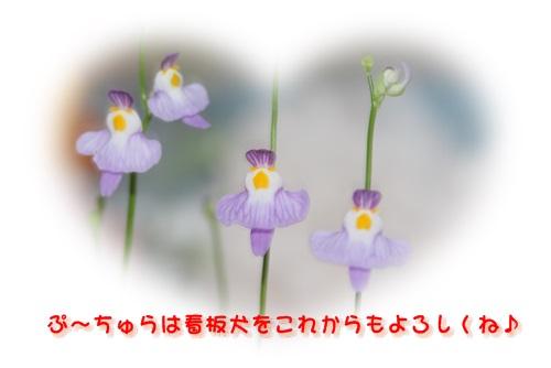 b0104592_14113486.jpg