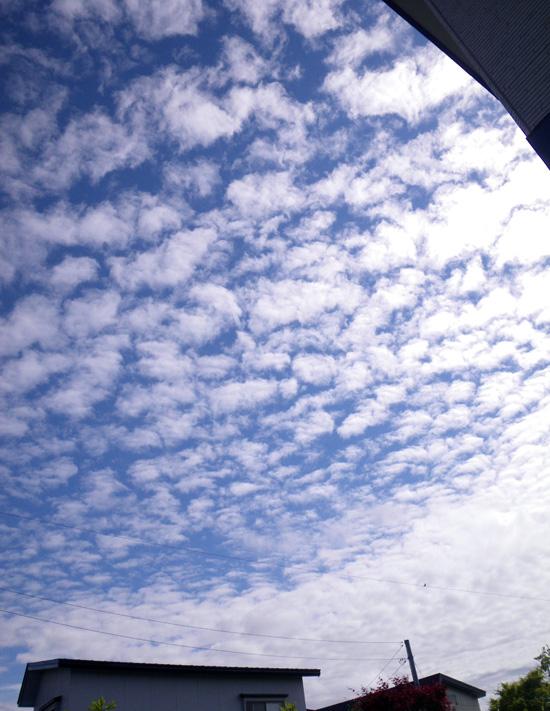空とモンタナと勿忘草♪_a0136293_19111025.jpg