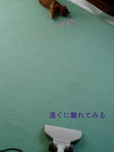 b0200310_10382357.jpg