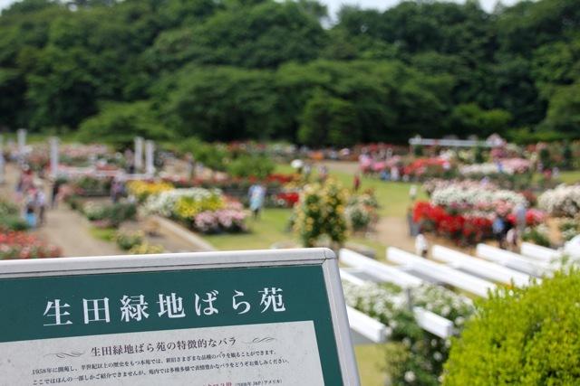 【生田緑地ばら苑】part 1_f0348831_20053504.jpg