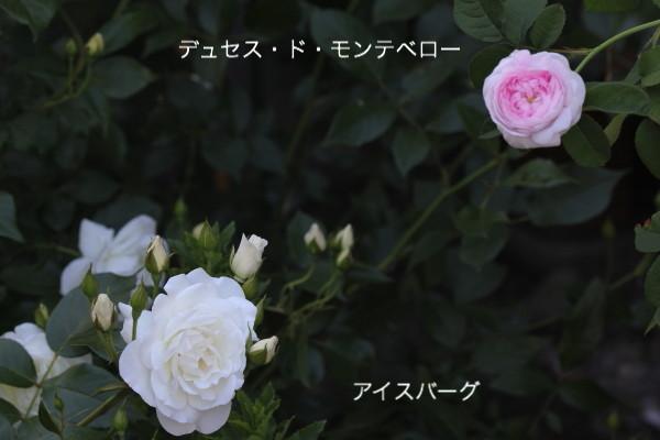 f0160554_2113305.jpg