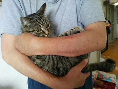 だっこ猫_b0112380_950384.jpg