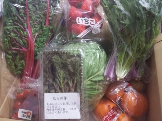 綾町旬野菜の定期便~♪_e0139694_12065475.jpg