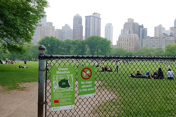 新緑のセントラルパークから並木道と芝生広場_b0007805_18485429.jpg