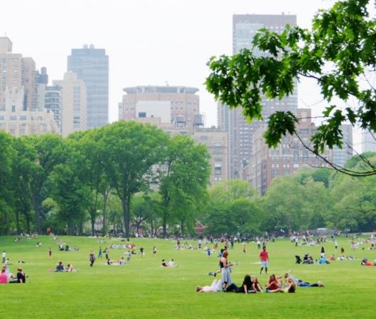 新緑のセントラルパークから並木道と芝生広場_b0007805_18504894.jpg