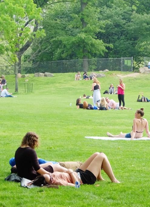 新緑のセントラルパークから並木道と芝生広場_b0007805_19253847.jpg