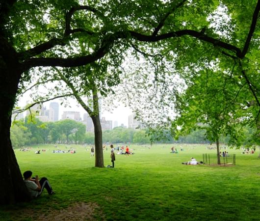 新緑のセントラルパークから並木道と芝生広場_b0007805_196380.jpg