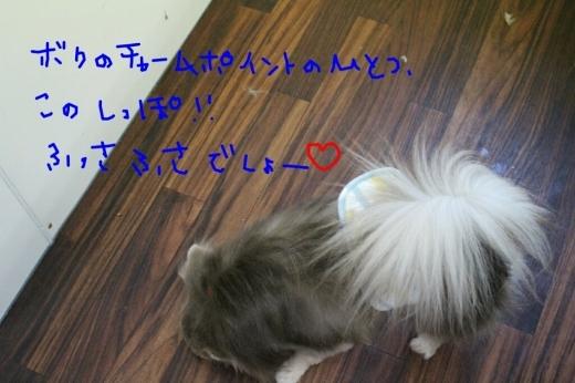b0130018_05101232.jpg