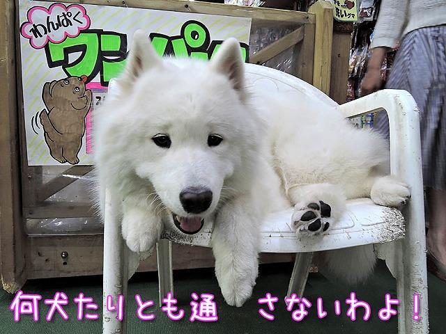 日曜サンぽデー_c0062832_711243.jpg