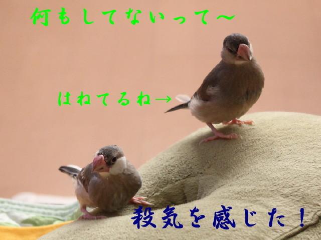 c0365734_17502181.jpg