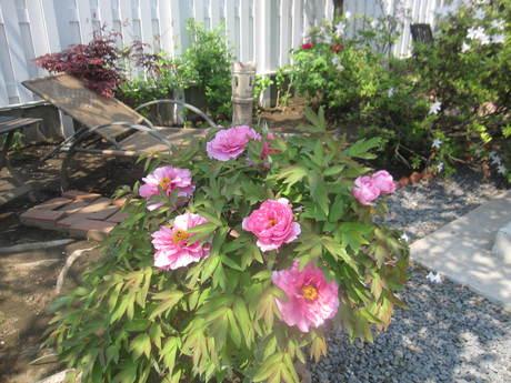 ブログをさぼったら色々なお花が咲いてきた~_a0279743_1534063.jpg