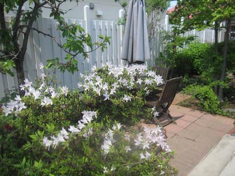 ブログをさぼったら色々なお花が咲いてきた~_a0279743_1541310.jpg