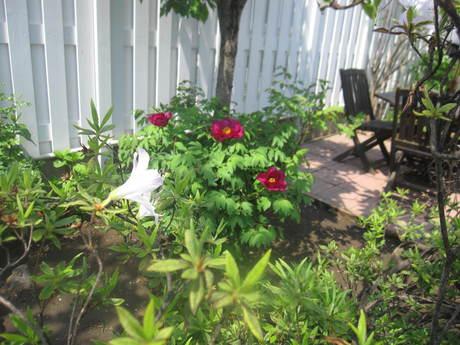 ブログをさぼったら色々なお花が咲いてきた~_a0279743_1545126.jpg