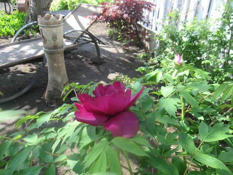 ブログをさぼったら色々なお花が咲いてきた~_a0279743_155635.jpg