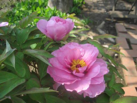 ブログをさぼったら色々なお花が咲いてきた~_a0279743_1562666.jpg
