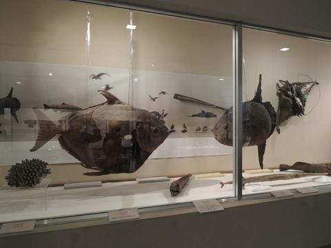 コラムリレー(第41回) 旧函館博物館ともう一つの明治の名残り・旧博物場所蔵資料_f0228071_851130.jpg