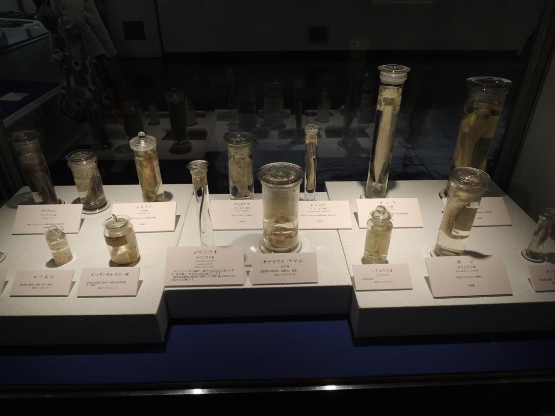コラムリレー(第41回) 旧函館博物館ともう一つの明治の名残り・旧博物場所蔵資料_f0228071_86179.jpg