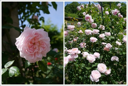花フェスタ記念公園2015 ④_b0142989_17123157.jpg