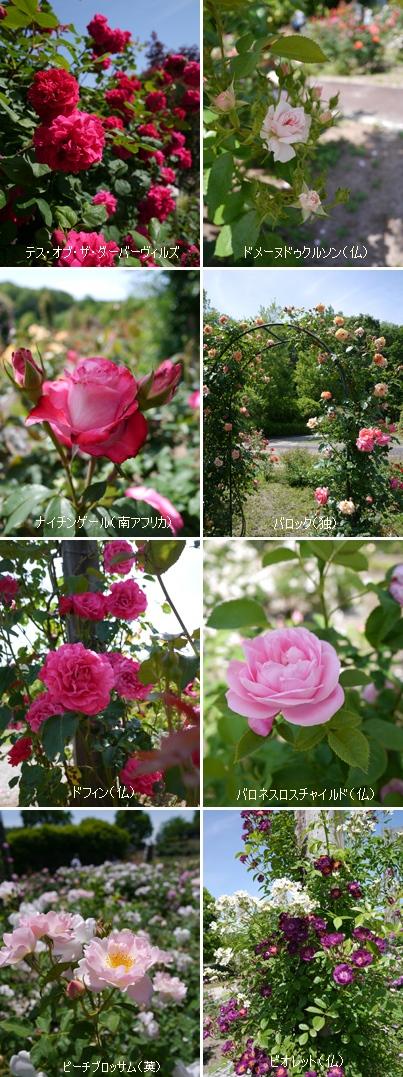 花フェスタ記念公園2015 ④_b0142989_17162950.jpg