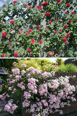 花フェスタ記念公園2015 ④_b0142989_1718278.jpg