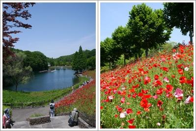 花フェスタ記念公園2015 ⑤_b0142989_17262049.jpg