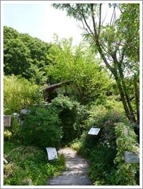 花フェスタ記念公園2015 ⑤_b0142989_17281136.jpg