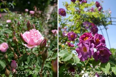 花フェスタ記念公園2015 ④_b0142989_1794456.jpg