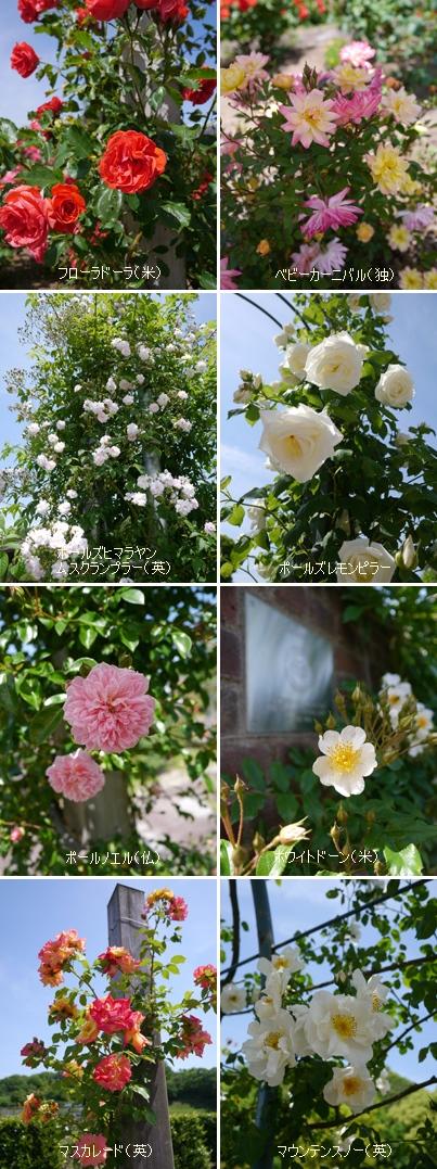 花フェスタ記念公園2015 ⑥_b0142989_22581115.jpg