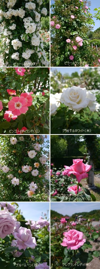花フェスタ記念公園2015 ⑥_b0142989_2258112.jpg