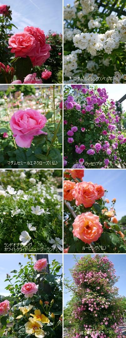 花フェスタ記念公園2015 ⑥_b0142989_22582180.jpg