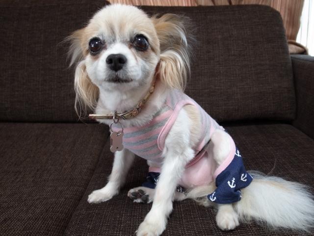 犬のハナ_f0197703_1042581.jpg