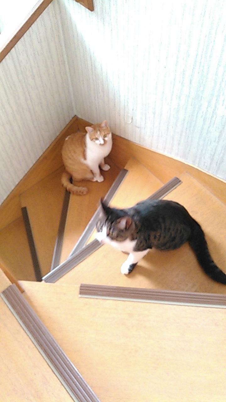 【猫】ぱっと見だと_f0141609_15204051.jpg