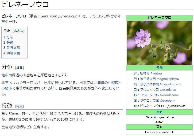ハルザキヤマガラシとピレネーフウロ(?)_c0025115_19114758.jpg