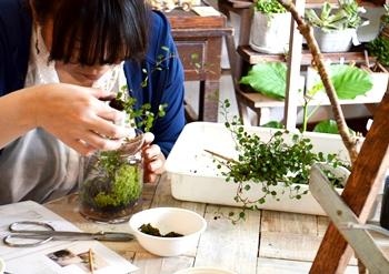 苔のテラリウム作り教室_d0263815_1441356.jpg