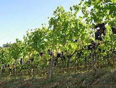 Poggio Scalette ワイン作り_a0112221_1126219.jpg