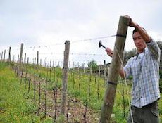 Poggio Scalette ワイン作り_a0112221_1128429.jpg
