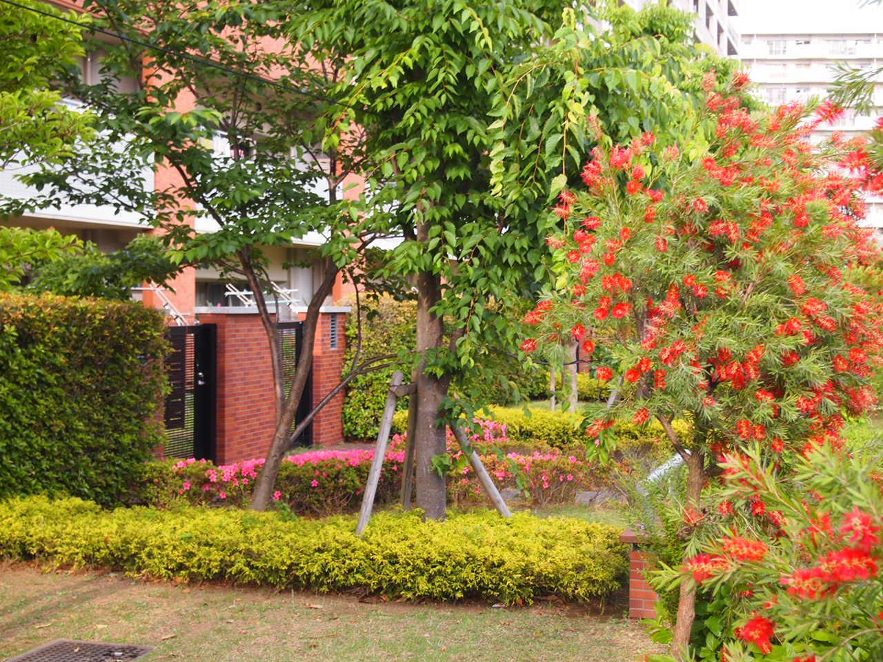 葛飾区/中庭のあるマンション。。。_a0214329_6563879.jpg