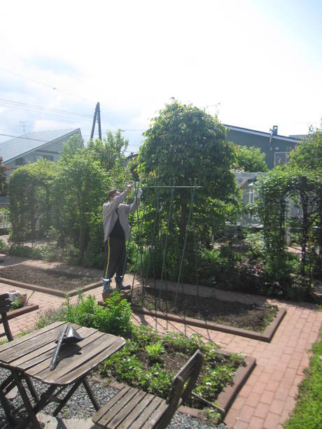 ポタジェの始まり~いんげん豆を蒔いた_a0279743_125373.jpg