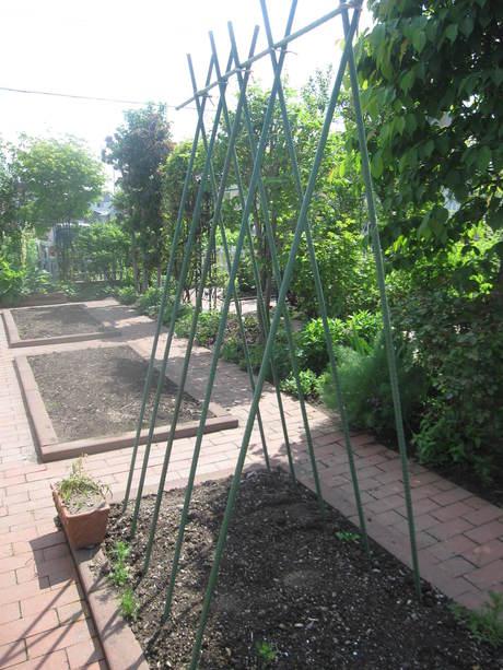 ポタジェの始まり~いんげん豆を蒔いた_a0279743_12541310.jpg