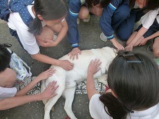 with dog   地震のあと 何度も空を見上げながら・・・_a0165160_07302900.jpg