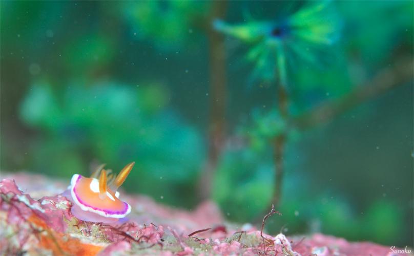 魚たちは元気にしてますわ〜☆みなべ・田辺_e0158261_8295849.jpg