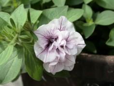 庭の花飾ろ♪_a0263675_001297.jpg