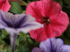 庭の花飾ろ♪_a0263675_00536.jpg