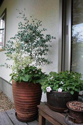 庭の花飾ろ♪_a0263675_010575.jpg