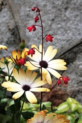 庭の花飾ろ♪_a0263675_02254.jpg