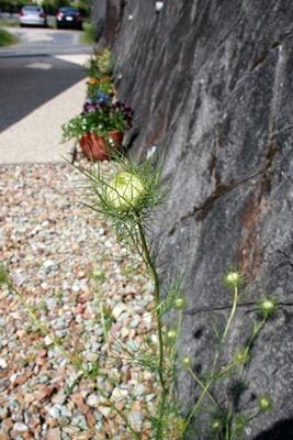 庭の花飾ろ♪_a0263675_055025.jpg