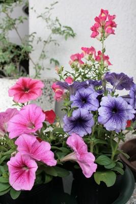 庭の花飾ろ♪_a0263675_23515955.jpg