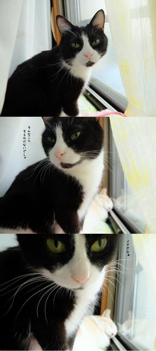 DAY OFF:窓ベッド_a0180681_2141077.jpg